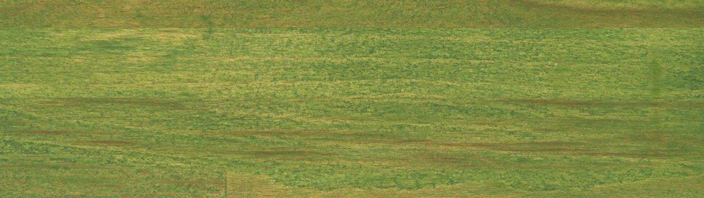 Verde 113 Olio
